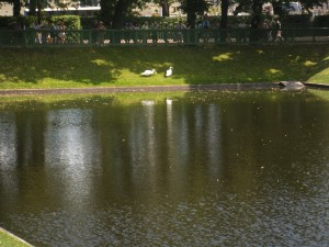 The Swan Pond in Mikhailovsky Park