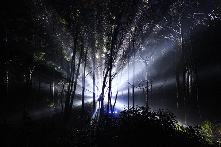 What's a musical forest? You have to see it to believe!
