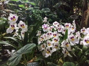 Orchids in the Tropical Greenhouse